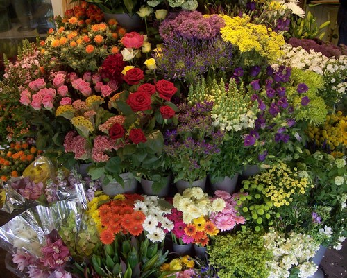 The Flower Shop Bushey Stanmore Watford The Shops