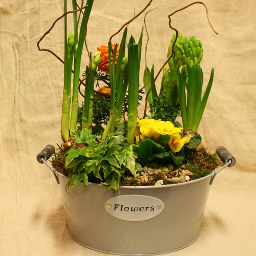 Spring Planted Flower Tin